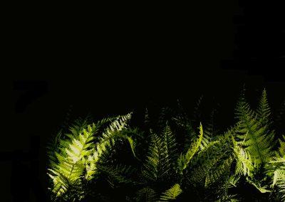 Privatgarten Beleuchtung-von Malm-Licht und Gestaltung-Freiburg-Lichtplanung-Lichtgestaltung-Lichtdesign